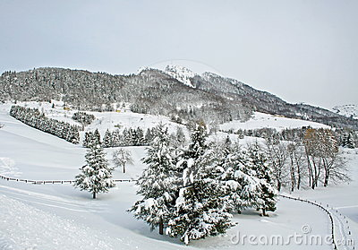 Snow-covered mountains and trees on a winter day