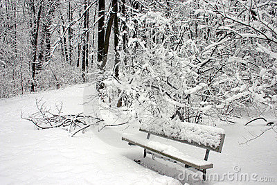 A snow covered park bench
