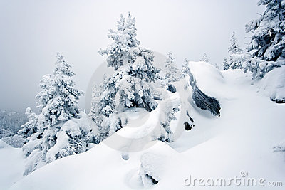 Snow-covered rocks, trees in Ural. Siberia.Taiga.