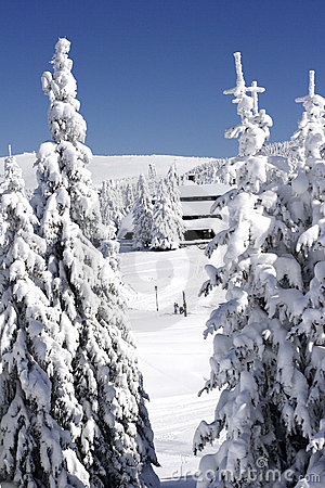 Free Snow Covered Ski Chalet In Pine Forest Stock Photo - 1574120