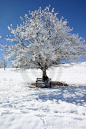 Free Snow Covered Tree Stock Photo - 194460