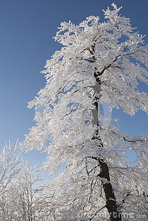Snow Covered Tree Under Blue Cloudy Sky During Daytime Free Public Domain Cc0 Image