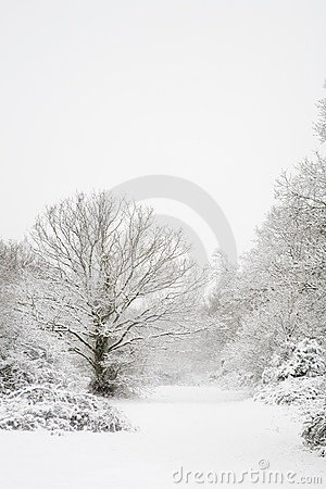 Free Snow Covered Trees Royalty Free Stock Photos - 3441558