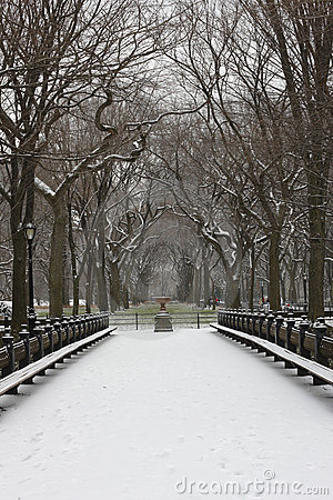 Free Snow Covered Trees And Lawn In Central Park Stock Photos - 7852323