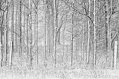 Snow Covered Trees with Fence