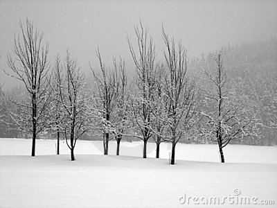 Snow covered trees in a midst of a blizzard