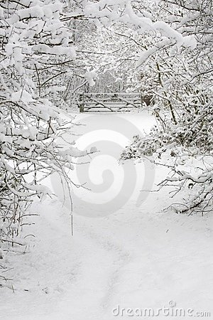 Free Snow Covered Woods Royalty Free Stock Photo - 3441645