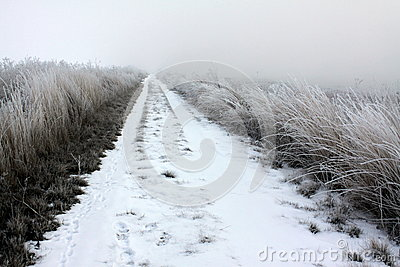 Snow on a Country Road