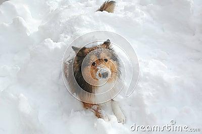 Snow dog 13