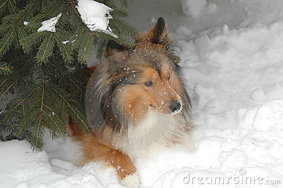 Snow dog 7