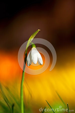 Free Snow Drop On Colorful Background Royalty Free Stock Images - 38663089