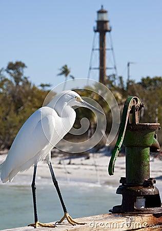 Free Snow Egret Royalty Free Stock Photo - 9118775