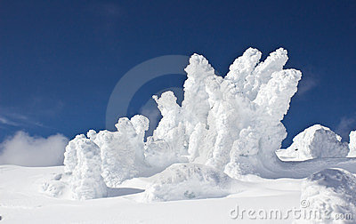 Snow engulfed trees against blue sky