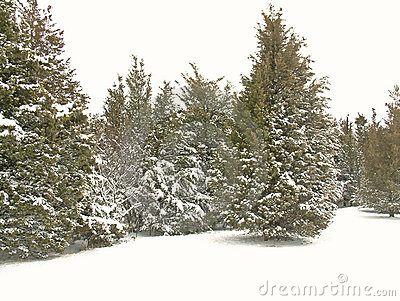 Snow för 2 park