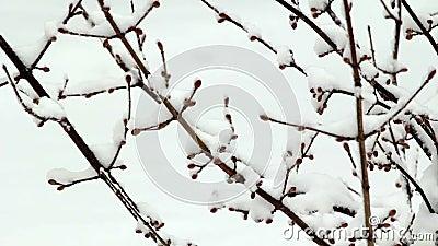 Snow failing on tree stock video footage