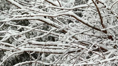 Snow failing on tree stock video
