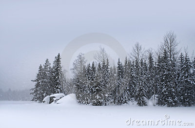 Snow falling day