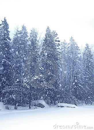 Snow falling forest