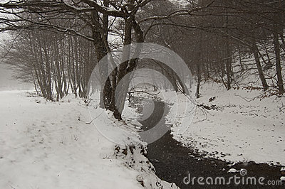 Snow falling in a forest with river in winter