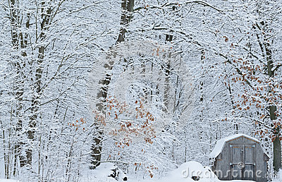 Snow Flocked Forest and Shed