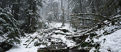 Snow and fog, a scenic forest valley in winter