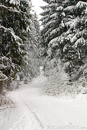 Free Snow Forest Stock Photo - 2285040