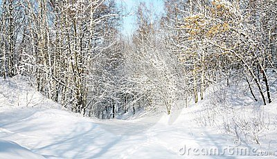 Snow forest in April