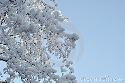 Snow and ice on branches
