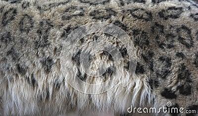 Cheetah Fur Close Up Snow Leopard, U...
