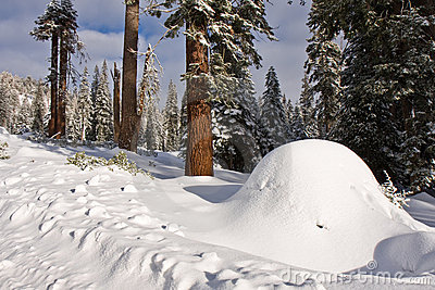 Snow Mound in Sequoia National Park