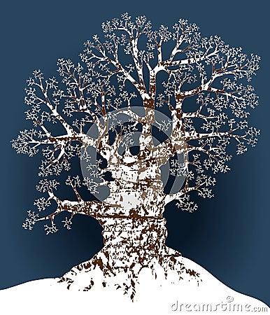 Free Snow Oak Royalty Free Stock Image - 5269996