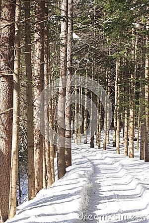 Snow-Scape