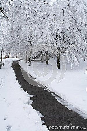Free Snow Scene Royalty Free Stock Photos - 1874238