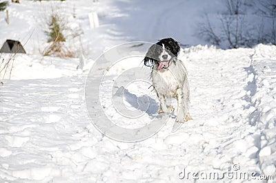 Snow Springer 1