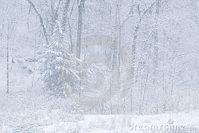 Snow storm and forest