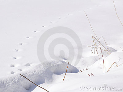 Snow Tracks - Horizontal