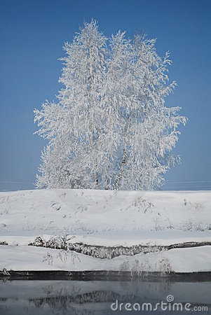Snow on tree near river
