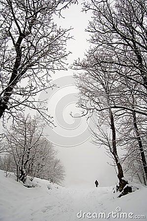 Snow winter fog walk alone
