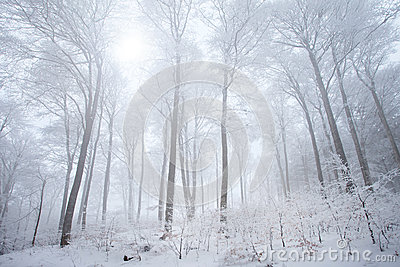 Snow in the winter forest