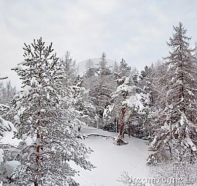 Snow winter landscape