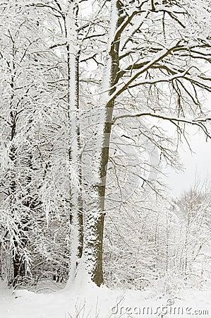Snow wrapped tree