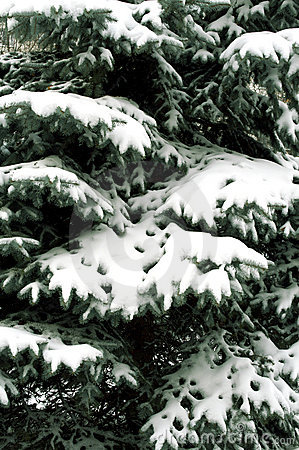 Snowbound branch