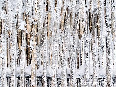 Snowbound fence.