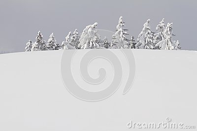 Snowbound trees behind hill