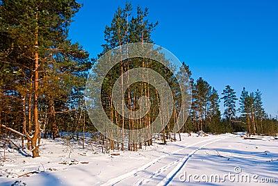 Snowbound winter forest