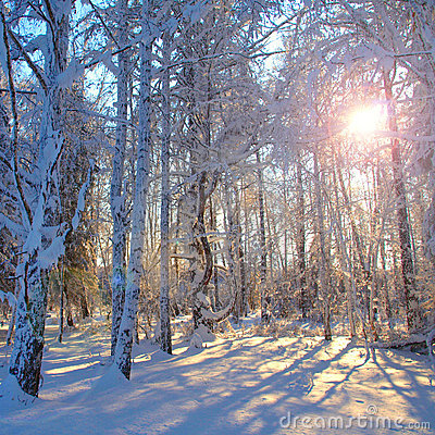 Snowbound winter forest