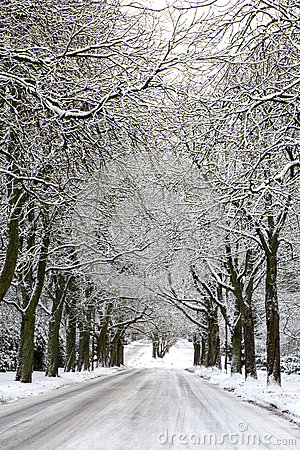 Snowcovered Road and trees