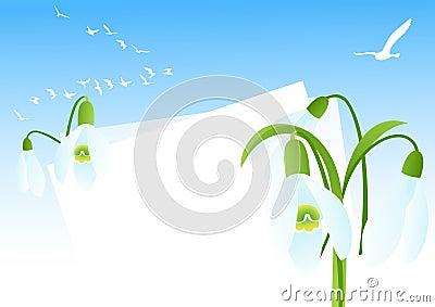 Snowdrop background