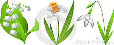 Snowdrop, narcissus, lily of the valley