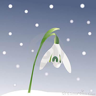 Snowdrop and snowflakes